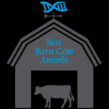 best barn cow awards